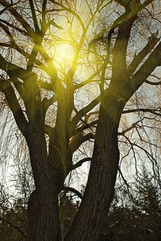 Free Sun Through The Tree Stock Photo - 8864070