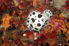 Free Underwaterworld / Snail Stock Images - 8865884