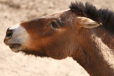 Free Wild Donkey Stock Photos - 8866083
