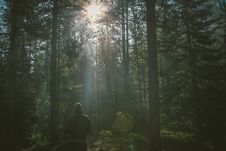 Free Person Walking Through A Forest Royalty Free Stock Photography - 88624357