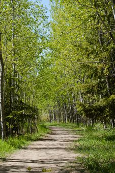 Free Forest Walkway Stock Photos - 88624673
