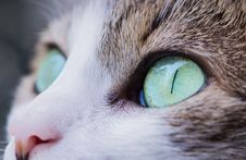 Free Close Up Photography Of Cat S Eye Royalty Free Stock Images - 88625909