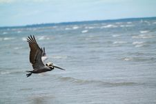 Free Bird Flying On Above On The Sea During Daytime Stock Photography - 88626012