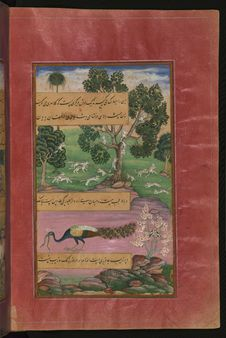 Free Animals Of Hindustan Monkeys, Rodents And The Peacock, From Illuminated Manuscript Baburnama &x28;Memoirs Of Babur&x29;, Walters Royalty Free Stock Images - 88693529