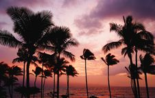 Free Palm Trees On Beach At Sunset Stock Photo - 88696170