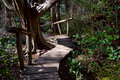 Free Rainforest Boardwalk With Steps Royalty Free Stock Image - 8873076