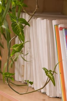 Free Folders On A Book Shelf. Stock Photography - 8870362
