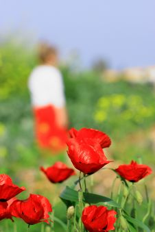 Free Poppy And Girl Royalty Free Stock Image - 8871046