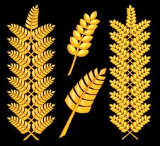 Free Abstract Golden Wheat 1 Royalty Free Stock Image - 8871186