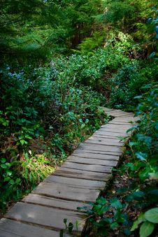 Free Rainforest Boardwalk Royalty Free Stock Images - 8873069