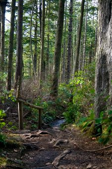 Free Rainforest Pathway With Railing Stock Photo - 8873130
