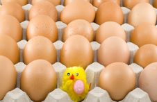 Free Easter Chickens Stock Photo - 8873470