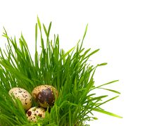 Free Quail Eggs In The Grass Royalty Free Stock Photography - 8874517