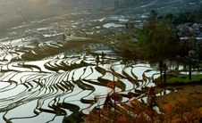 Free Morning Of YuanYang Rice Terrace Royalty Free Stock Photo - 8875365