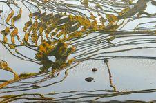 Free Morning Of YuanYang Rice Terrace Royalty Free Stock Image - 8875386