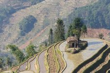 Free YuanYang Rice Terrace - The Sea Nail Royalty Free Stock Photography - 8875397
