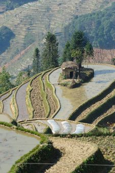 Free YuanYang Rice Terrace - The Sea Nail Royalty Free Stock Images - 8875409