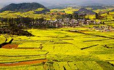 Rape Fields & Village Royalty Free Stock Photography