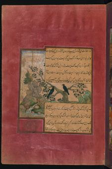 Free Birds Of Hindustan: Starlings, Called Pandāvalī &x28;Memoirs Of Babur&x29;, Walters Art Museum Ms. W.596, Fol.31a Stock Photos - 88753083