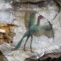 Free Dangerous Bird Stock Photo - 8881410