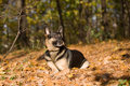 Free Lying Dog In The Forest Stock Image - 8884471