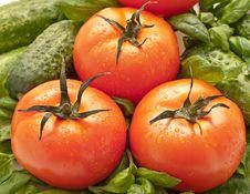 Free Tomatoes Close Up Royalty Free Stock Photos - 8882478