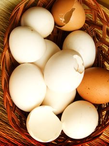 Free All Eggs Royalty Free Stock Photo - 8886525