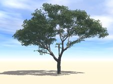 Free Cherry Tree Under Sun Royalty Free Stock Photography - 8886917