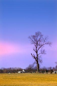 Free Single Tree Stock Photos - 8887143