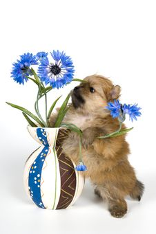 Free Puppy With A Vase Royalty Free Stock Photo - 8888355