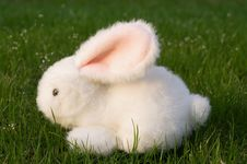 Hare Stock Photography