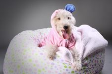 Free The One Ear Dog Royalty Free Stock Photo - 8889185
