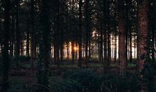 Free Tree Trunk On Forest During Sunset Stock Photography - 88897302