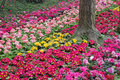 Free Flower Bed Royalty Free Stock Photography - 8891927