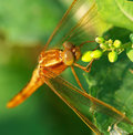 Free Dragonfly Royalty Free Stock Images - 8897609
