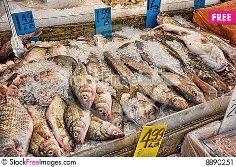 Fish for sale free stock images photos 8890251 for Stock fish for sale