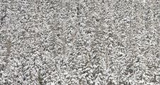 Free Winter Forest Abstract Stock Images - 8892344