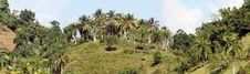 Free Palm Landscape Stock Images - 8894014