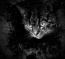 Free Space Cat Stock Images - 8894164