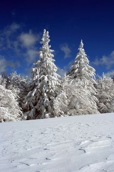 Free Covered With Snow Stock Photography - 8894172