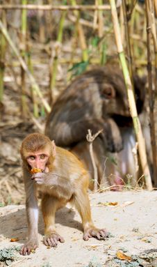Free Monkey Baby Stock Photography - 8895032