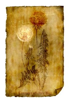 Free Old Paper With Dandelion Stock Photos - 8895563