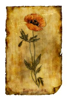 Free Old Paper With Poppy Royalty Free Stock Photos - 8895578