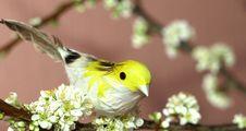 Free Sparrow On Plum Tree Stock Image - 8896151
