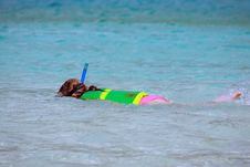 Free Snorkel Girl Royalty Free Stock Photos - 8896238