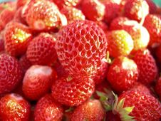 Free Strawberry Royalty Free Stock Images - 8896239