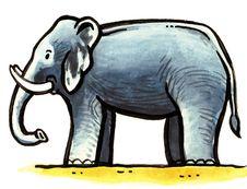 Free Grey Elephant Stock Image - 8896591