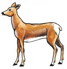 Free Roe Animal Royalty Free Stock Photography - 8896617