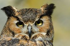 Free Eagle Owl Stock Image - 8897381