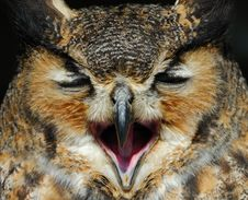 Free Eagle Owl Stock Images - 8897454